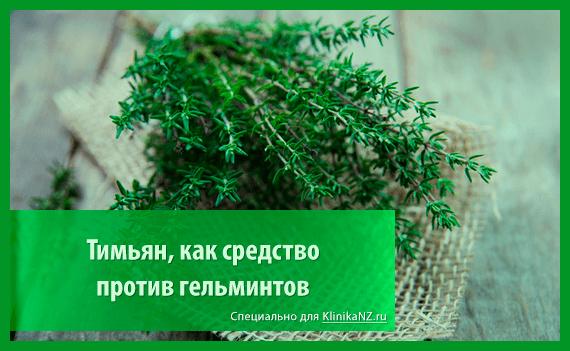 Травы от глистов: список наиболее эффективных глистогонных трав