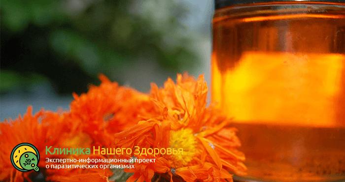 Лечение описторхоза народной медициной в домашних условиях: рецепты и советы