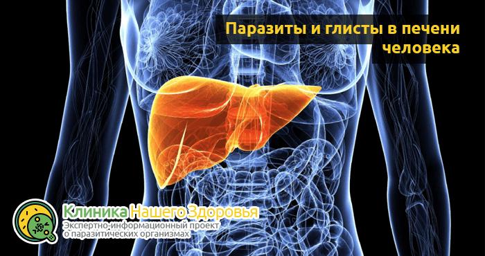 Глисты в печени: симптомы, виды и лечение печеночных паразитов