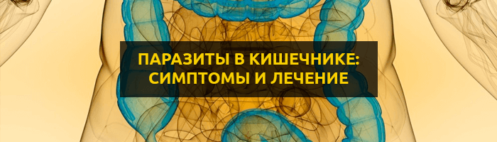 Червяки в животе: виды паразитов и характерная симтоматика