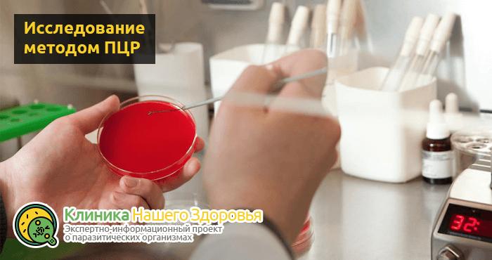 Анализ крови и кала на лямблии: подготовка, правила и особенности