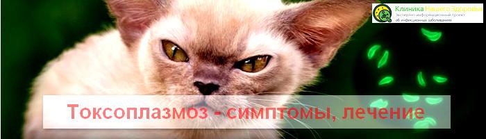 Photo of Что такое токсоплазмоз, симптомы и лечение