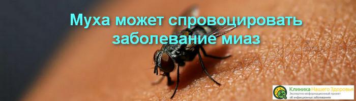 Photo of Заболевание миаз, как мухи могут его спровоцировать