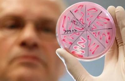 Бактерии clostridium botulinum