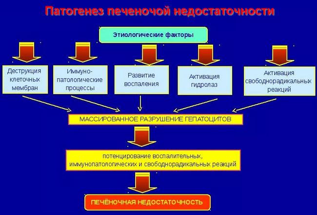 патогенез печеночной недостаточности