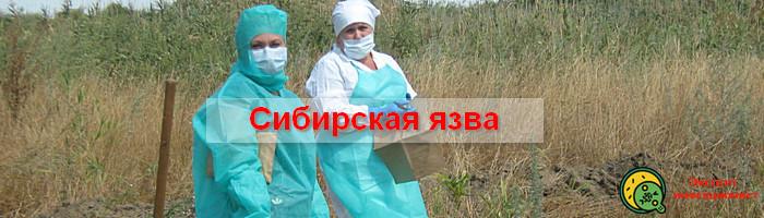 Сибирская язва способы заражения