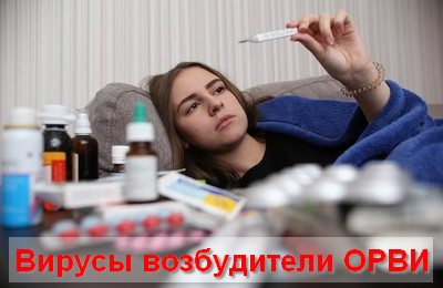 вирусы возбудители ОРВИ