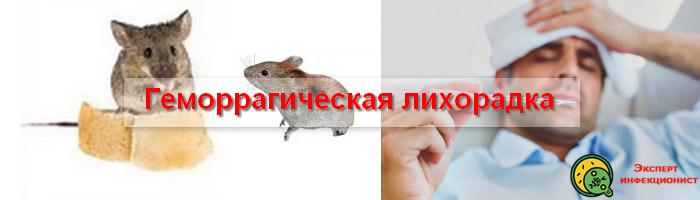 Photo of Как передается геморрагическая лихорадка, симптомы и лечение