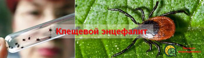 Photo of Как профилактировать клещевой энцефалит