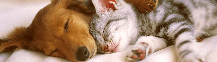 Анкилостомоз у животных: симптомы и лечение кошек и собак