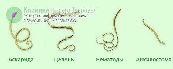 Виды паразитов у человека фото