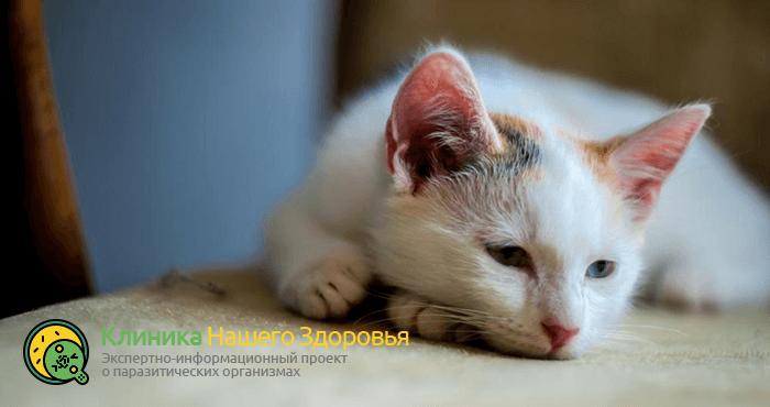 Глисты у кошек: виды, профилактика, симптомы и лечение гельминтов