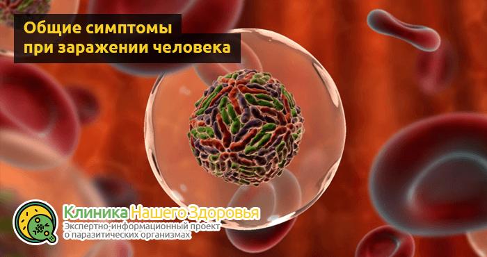 Паразиты в крови человека: симптомы, диагностика и лечение