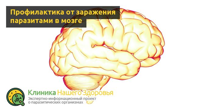 Паразиты в мозге: симптомы, виды и лечение