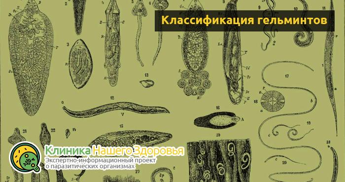 Касторка с коньяком: очищение организма от паразитов и глистов