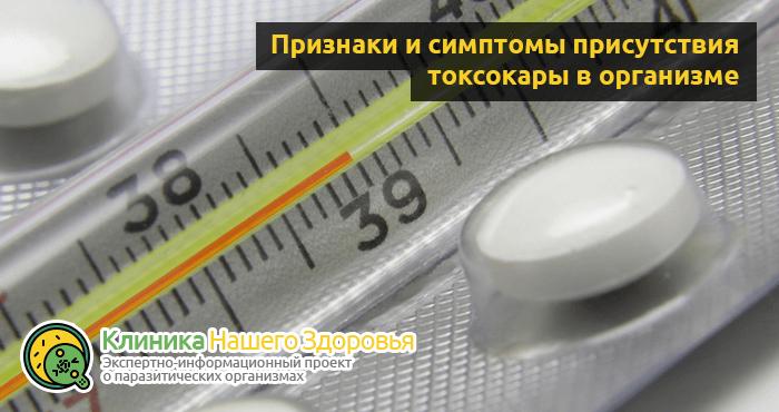 Токсокара: виды, симптомы, диагностика и лечение у человека