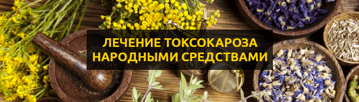 Лечение токсокароза народными средствами и методами