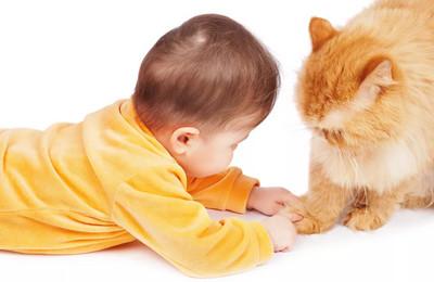 как развивается болезнь кошачьих царапин